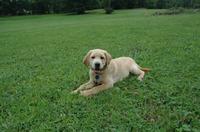 Stella_in_the_grass_smilig