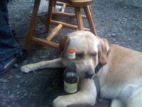 Stella_and_whisky_bottle